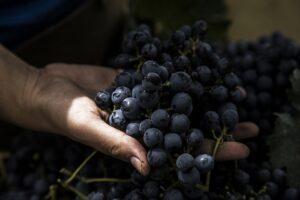 vinhos da argentina
