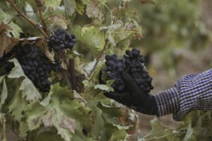 vinhos espanhois don aurelio