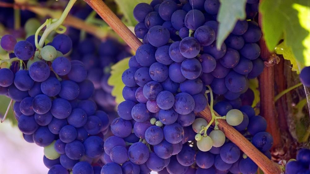vinhos-ribeira-del-duero