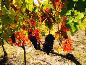 vinhos da Rioja