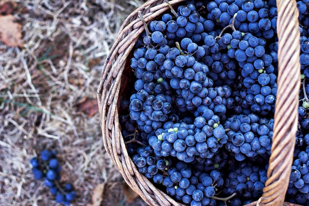 Vinhos varietais ou de corte?